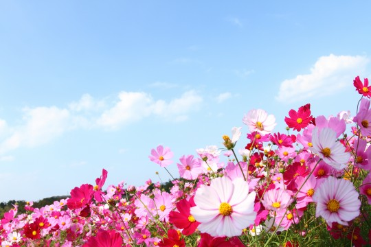 IMG_8803-540x360.jpg.pagespeed.ce.amE2Pv__P-[1]
